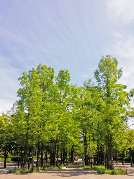 神戸の東公園の森の小道。 ストックフォト