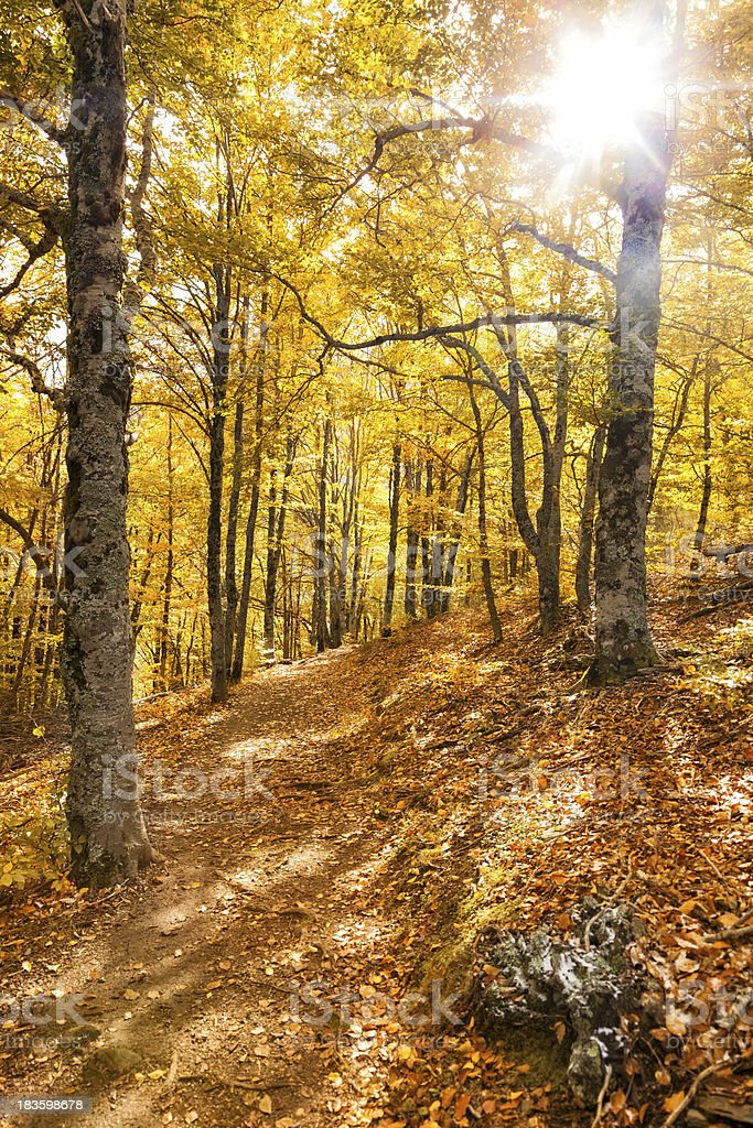 Forest path in the fall stock photo