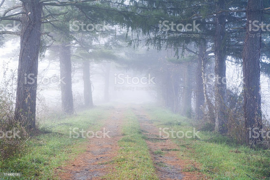 Forest path in the fog royalty-free stock photo