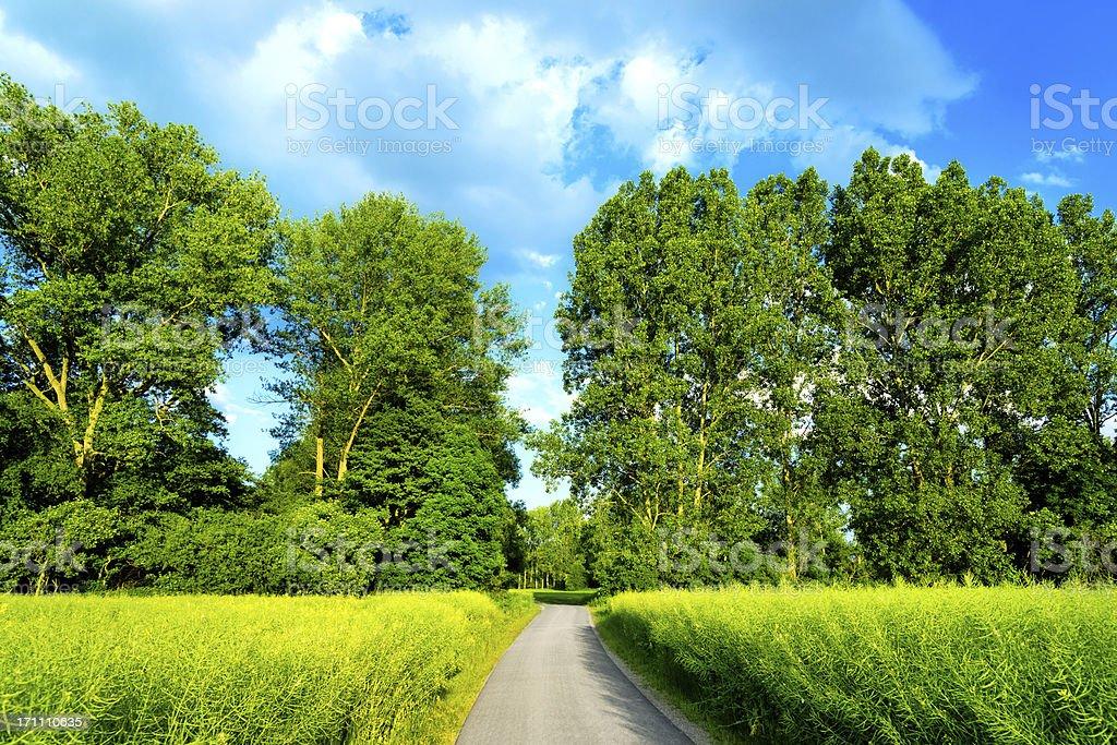 Waldweg im Sommer – Foto