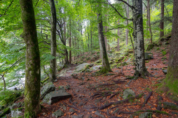 Forest path in the Verzasca Valley stock photo