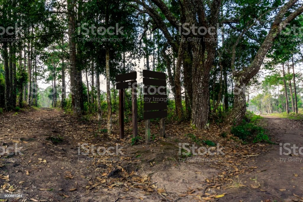 Forest path junction and pine tree with wooden sign stock photo