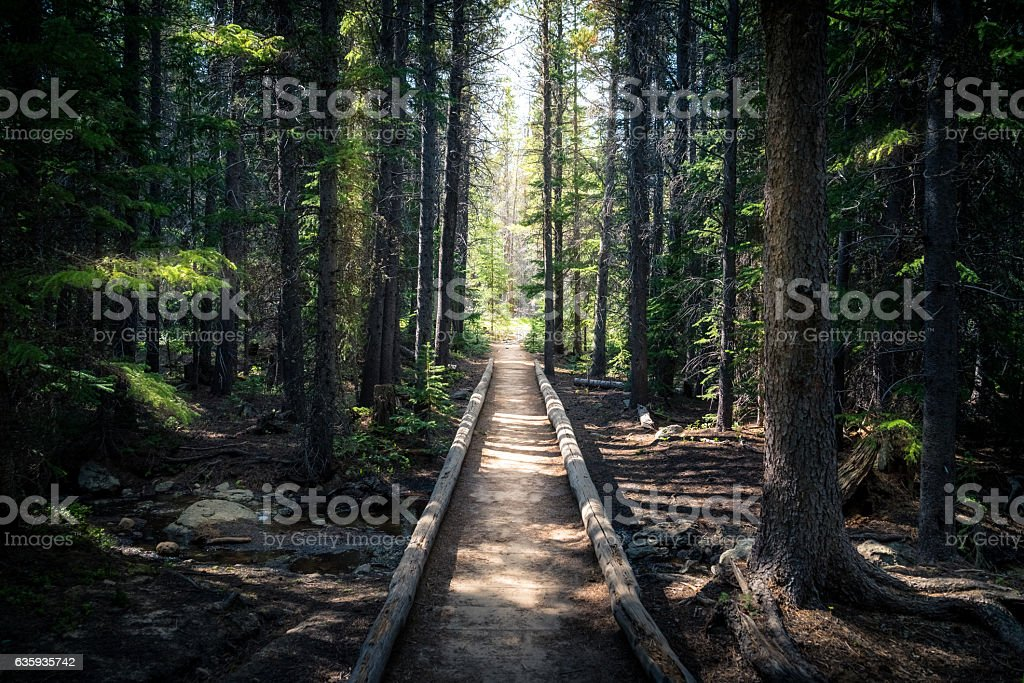 Forest path leading to an sunlit opening. - foto de stock