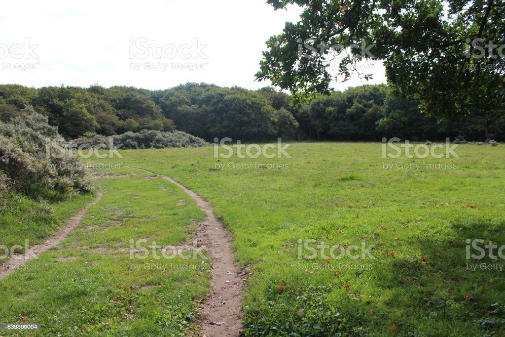 Forest path, Noordhollands Duinreservaat stock photo