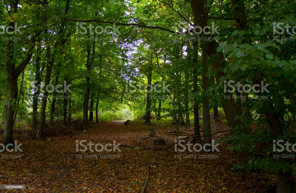 Forest path on a sunny day stock photo