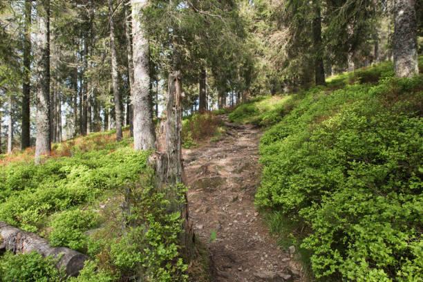 Waldweg – Foto