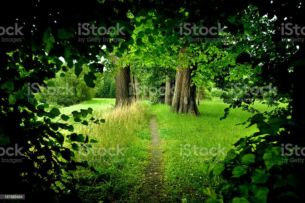 Forest Path - Royalty-free Awe Stock Photo