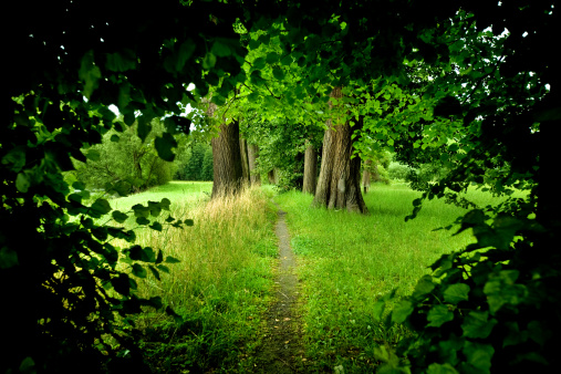 Forest Path Stock Photo - Download Image Now