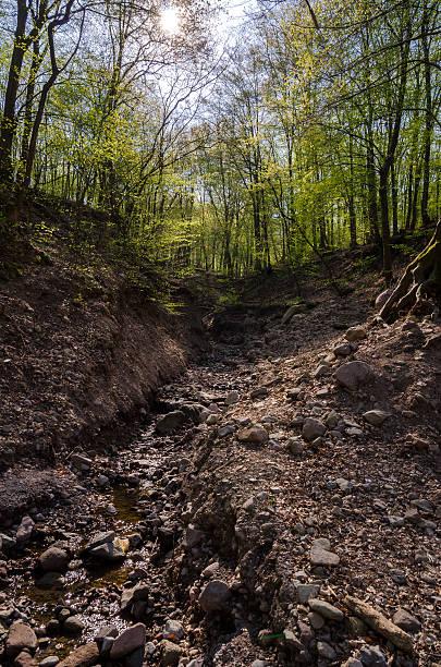 waldweg - nationalpark müritz stock-fotos und bilder