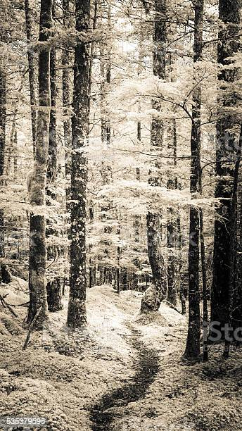 Photo of Forest Path
