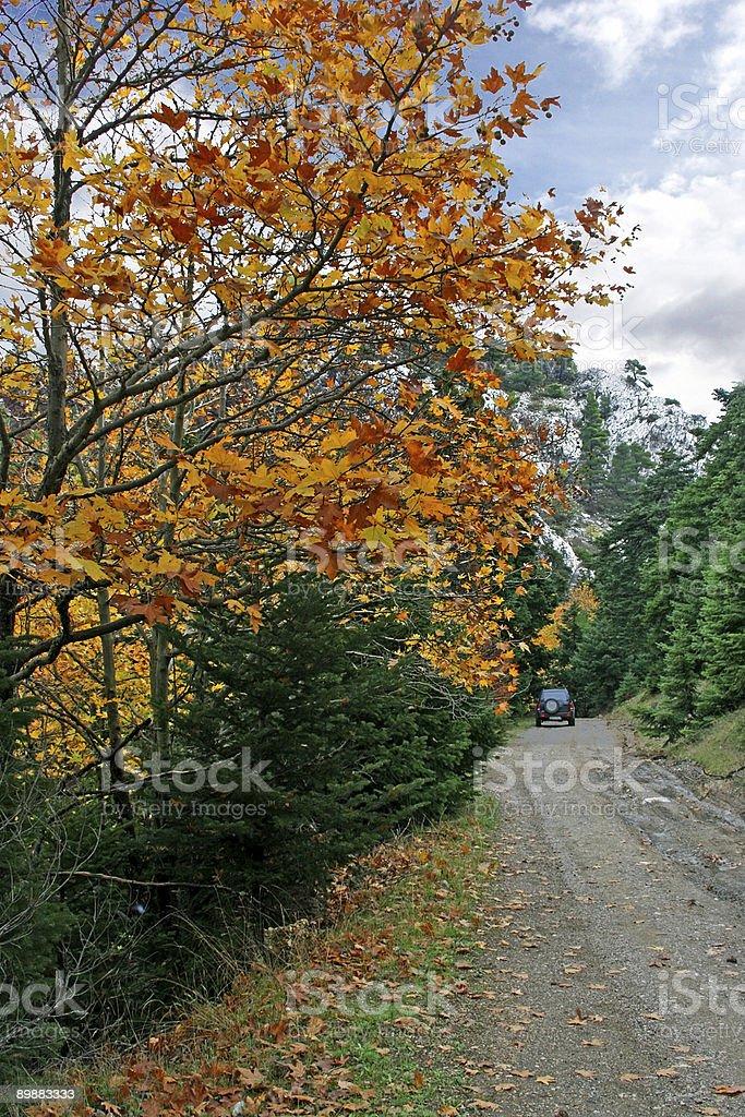 Trayectoria del bosque foto de stock libre de derechos