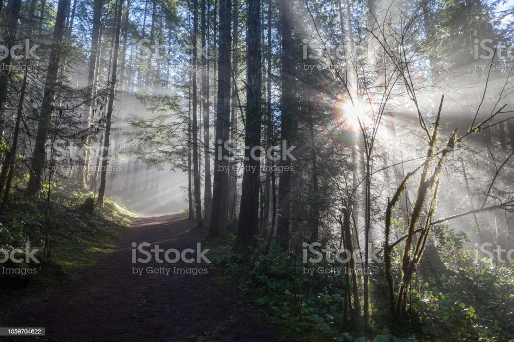Forest path with magical light stock photo