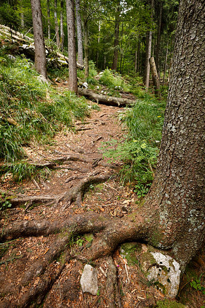 Forest path with obstacles stock photo