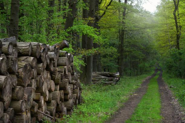 Waldweg mit Holzstapel – Foto