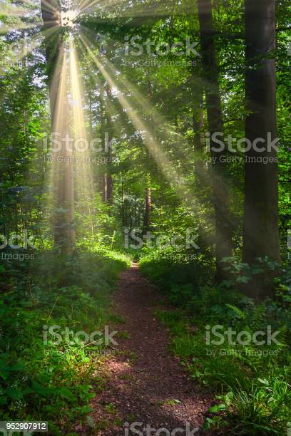 Photo of Forest path with sunshine