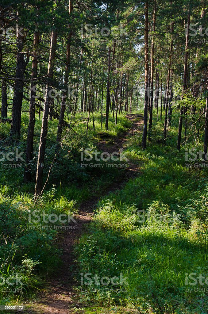 forest paths royalty-free stock photo