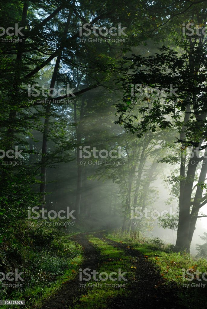 Forest Pathway at Sunrise with Fog stock photo