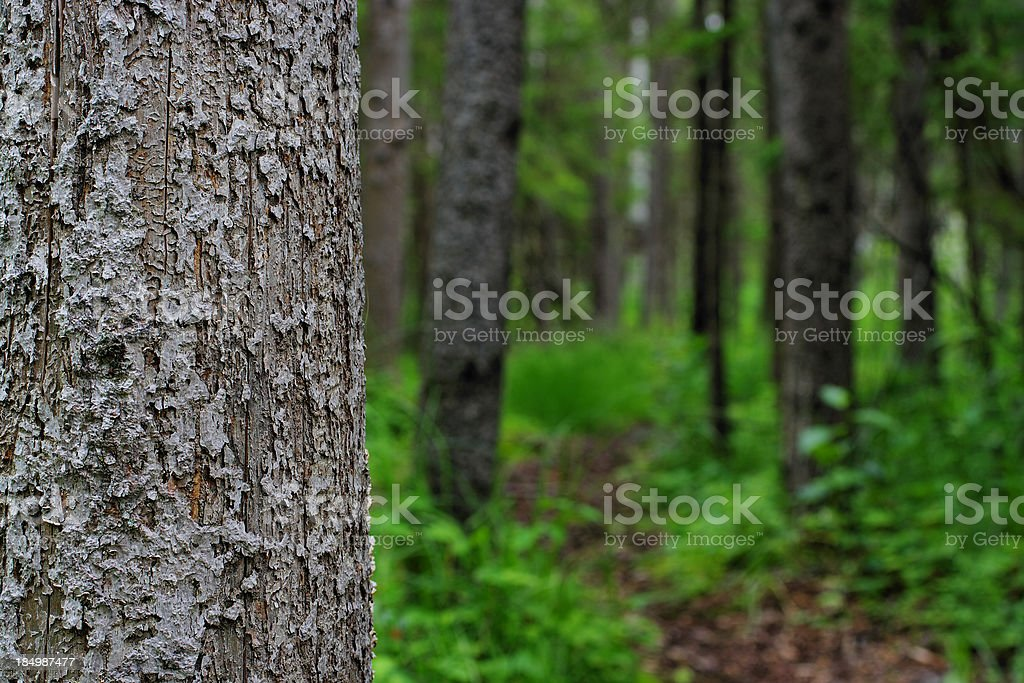 Forest Pathway stock photo