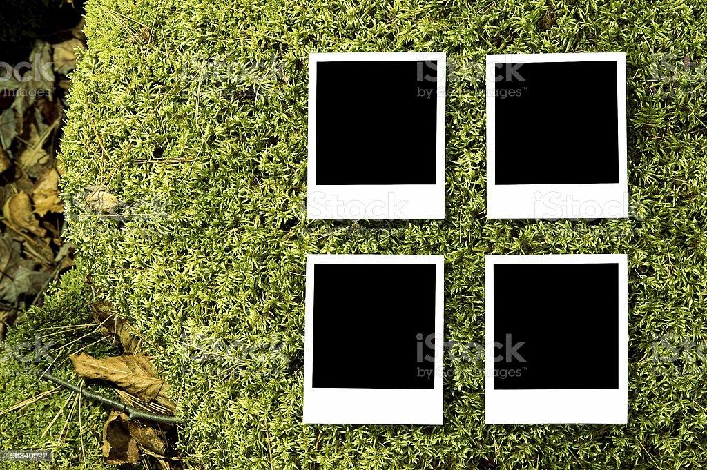 Forêt de Photos - Photo de Album de photographies libre de droits