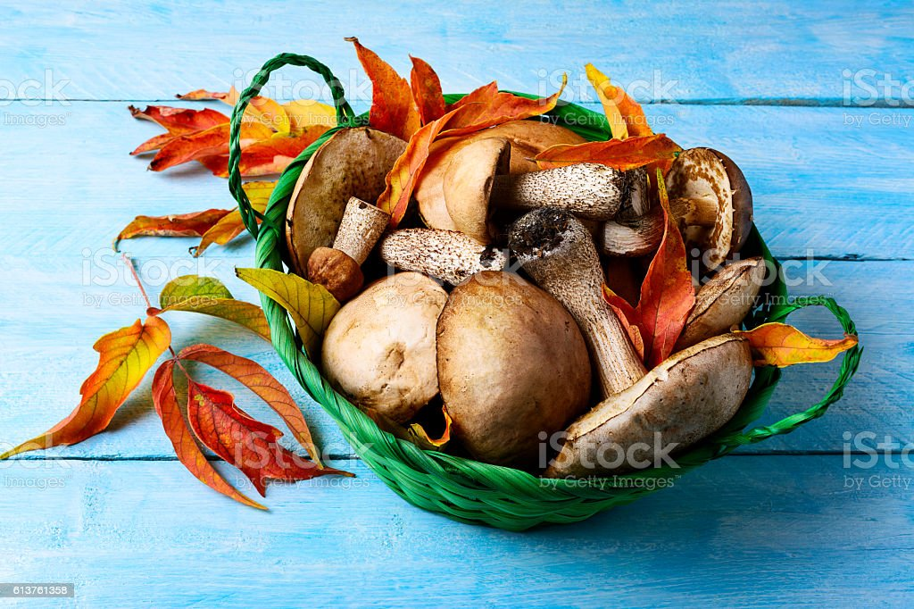 Forest picking mushrooms in green wicker basket stock photo
