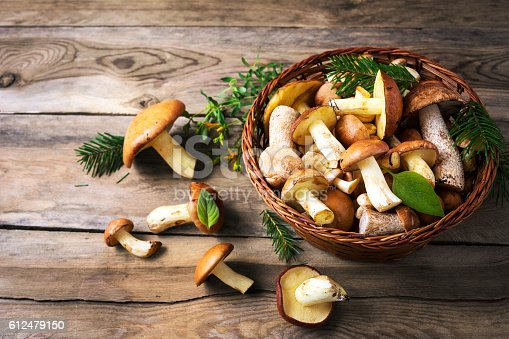 Forest picking mushrooms in the wicker basket.  Fresh raw mushrooms on the table.  Leccinum scabrum.