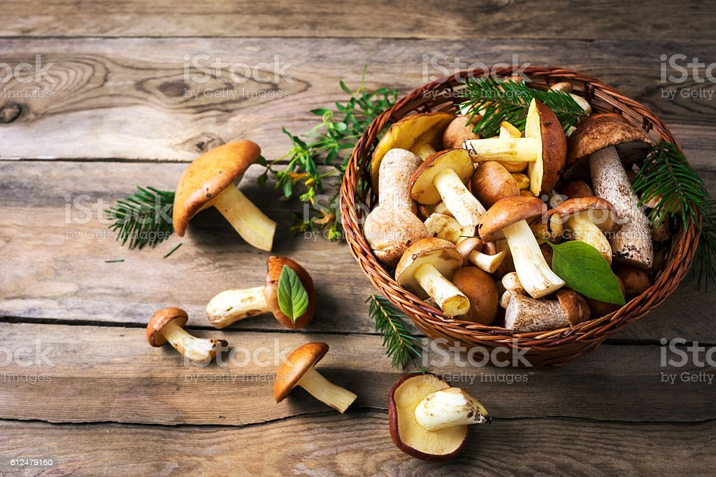 Forest picking mushrooms in the wicker basket stock photo