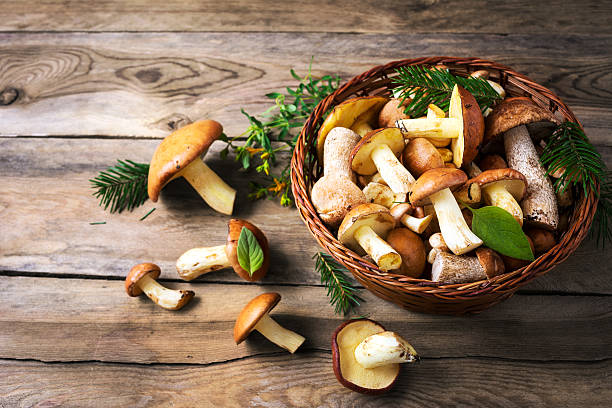 forest picking mushrooms in the wicker basket - fungus stock pictures, royalty-free photos & images
