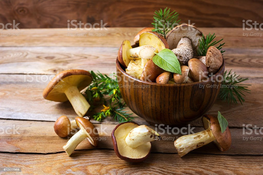Forest picking mushrooms in wooden bowl stock photo