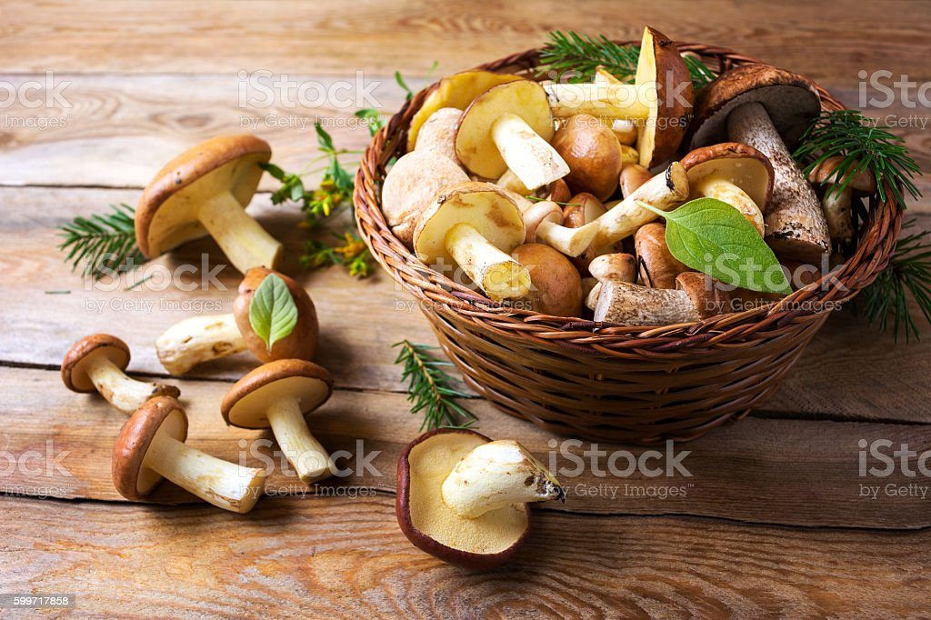 Forest picking mushrooms on the rustic wooden background stock photo