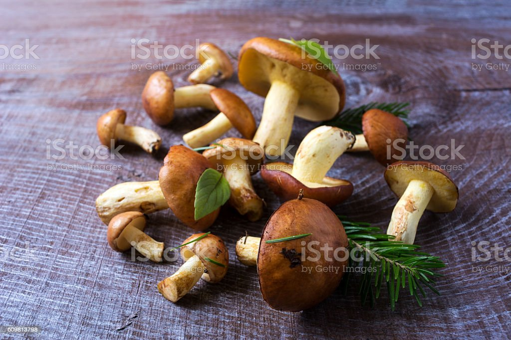 Forest picking mushrooms on the wooden background selective focus stock photo