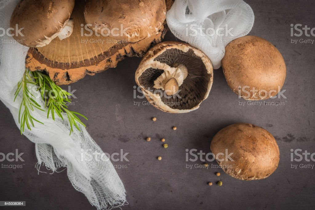 Forest picking mushrooms stock photo