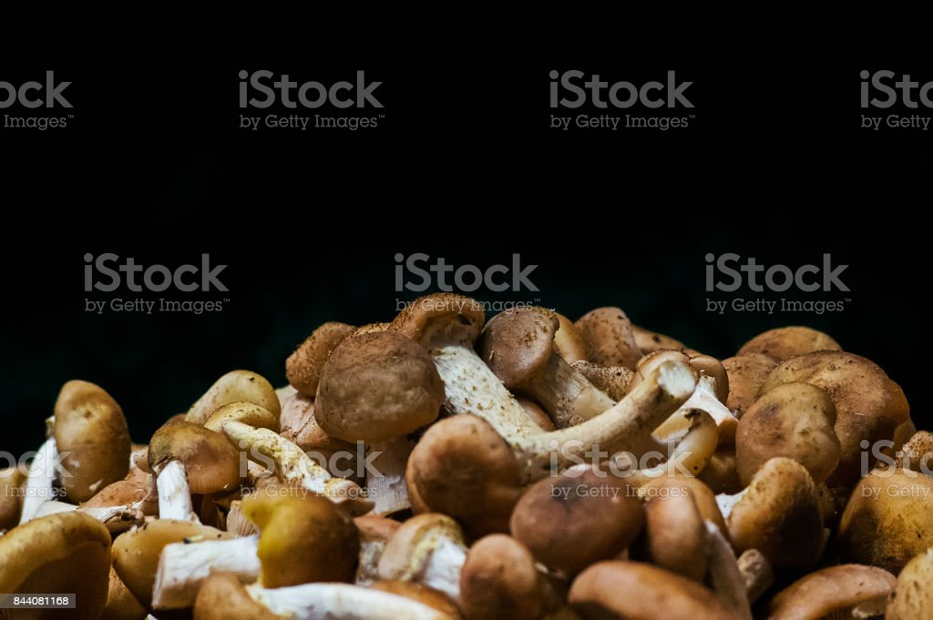 Forest picking mushrooms top view copy space stock photo