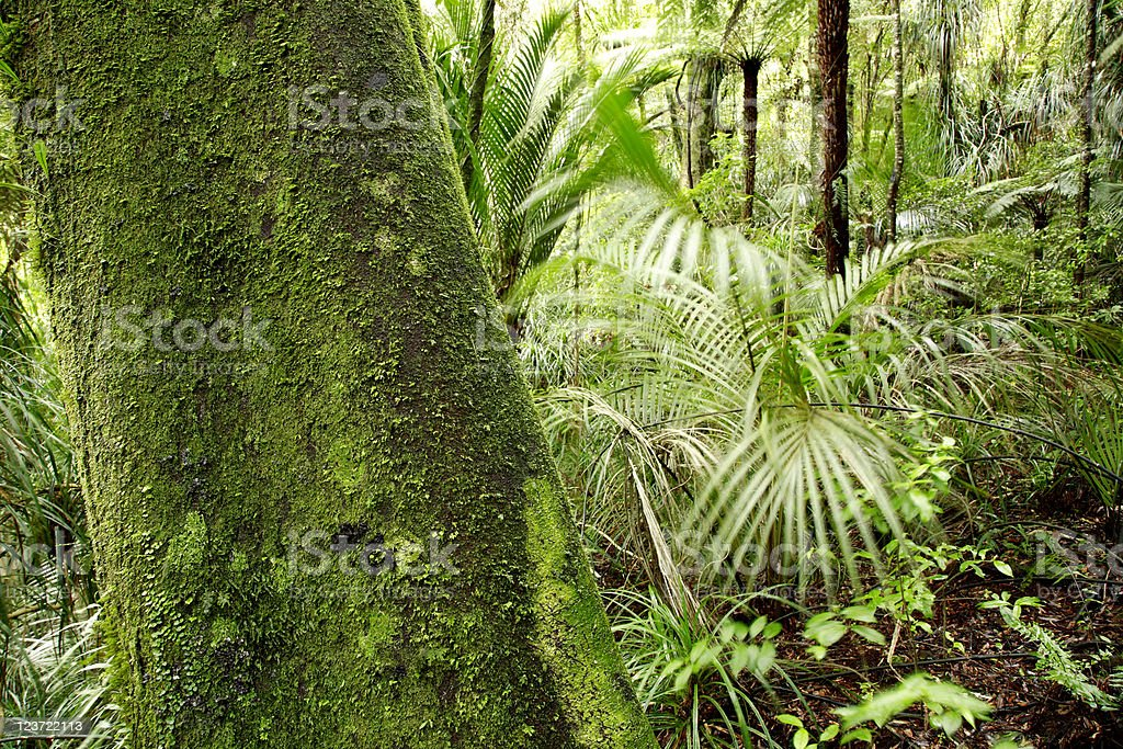 Forest royalty-free stock photo