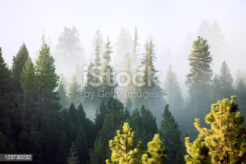 Forest in the mist, Mt. Rainier National Park, Washington State, USA.