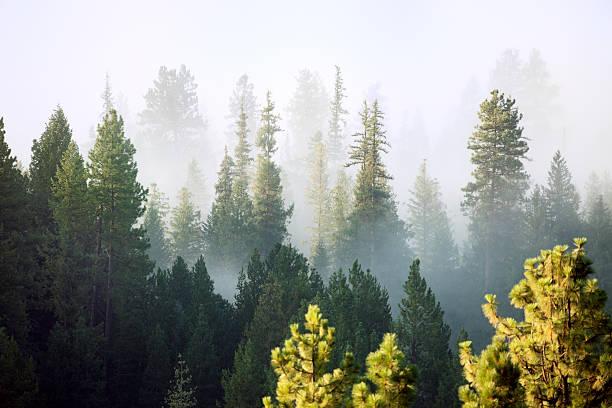 forest - wybrzeże północno zachodnie pacyfiku zdjęcia i obrazy z banku zdjęć