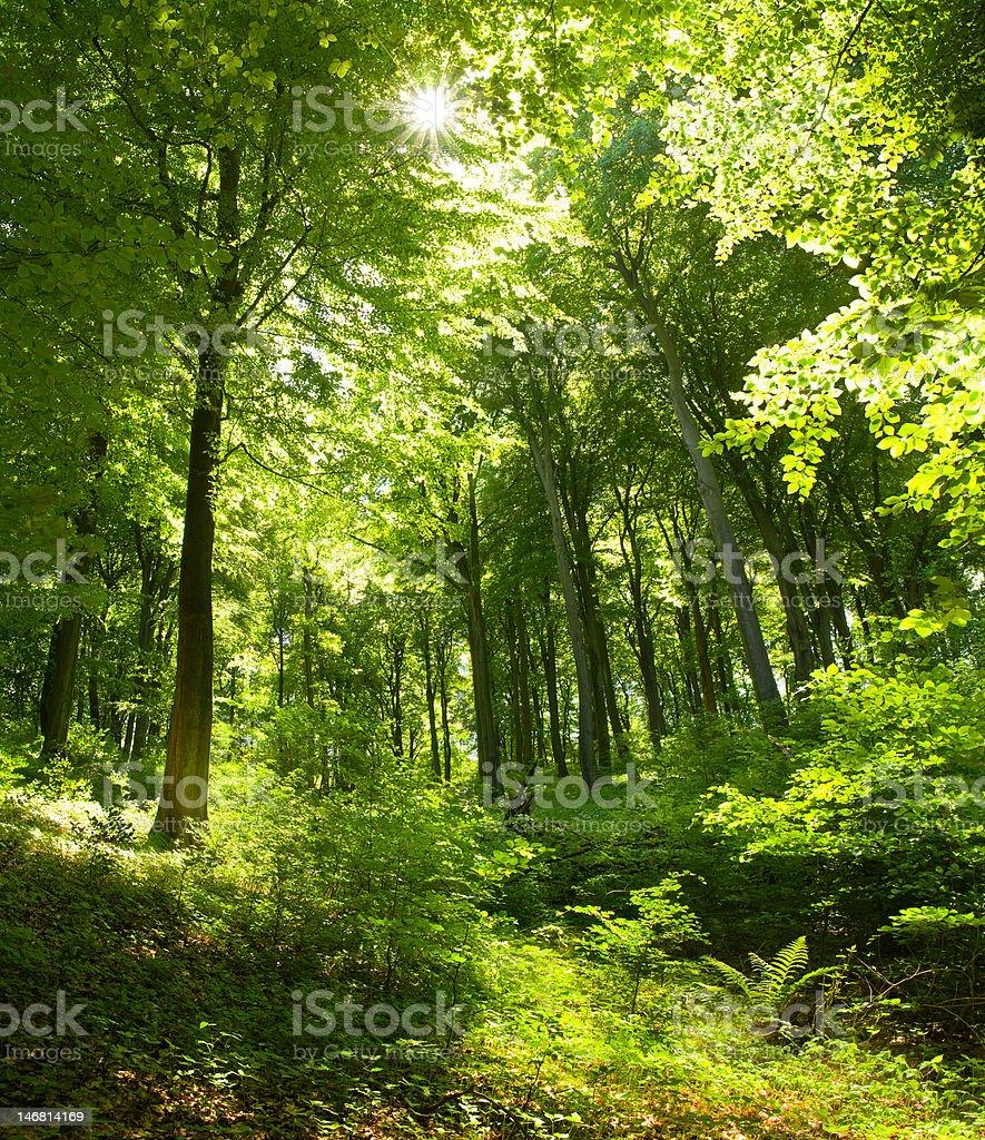 Bosque - foto de stock