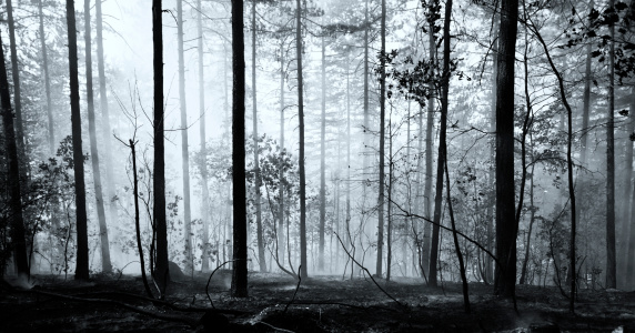 A Forest Caught Fire.