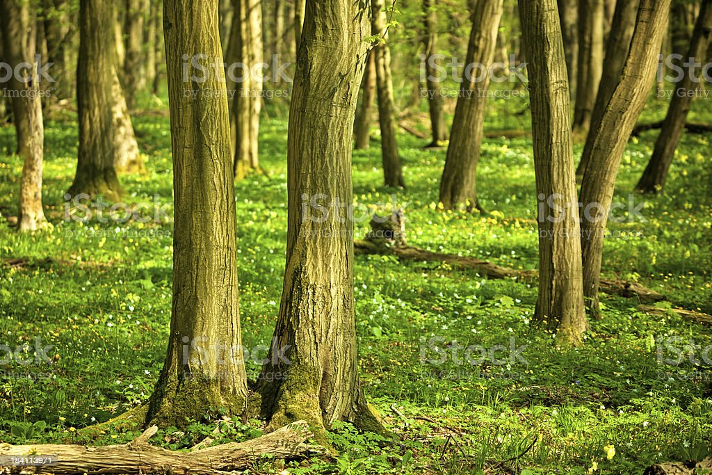 Forest – Foto
