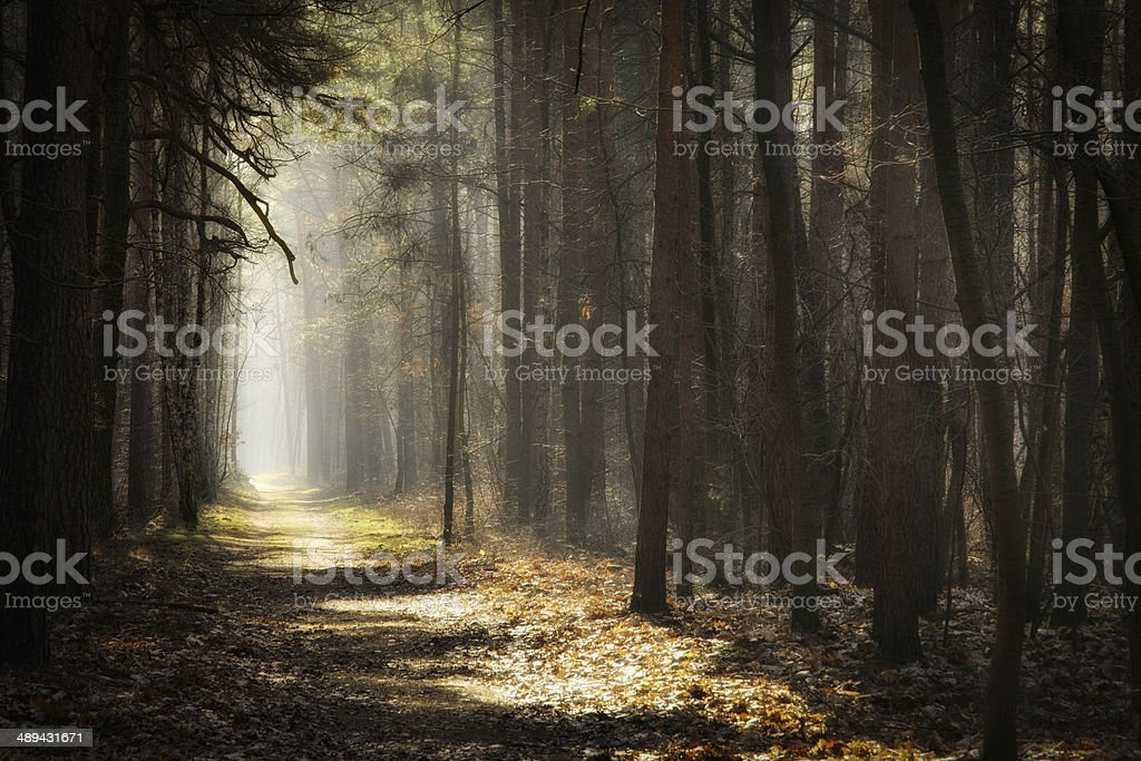 Forest a path in a forest Autumn Stock Photo