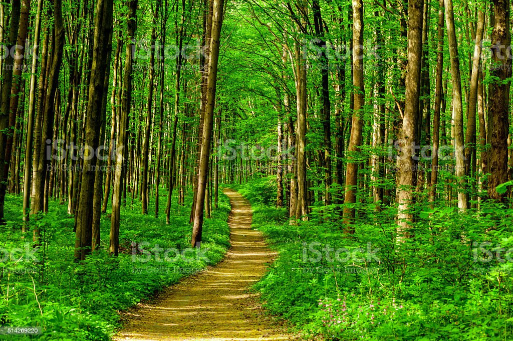 forest spring forest trees. nature green wood sunlight backgrounds. sky Beauty In Nature Stock Photo