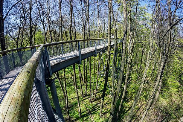 forest - baumwipfelpfad stock-fotos und bilder
