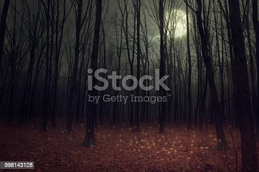 Moon light in darkness autumn forest. Beauty nature background