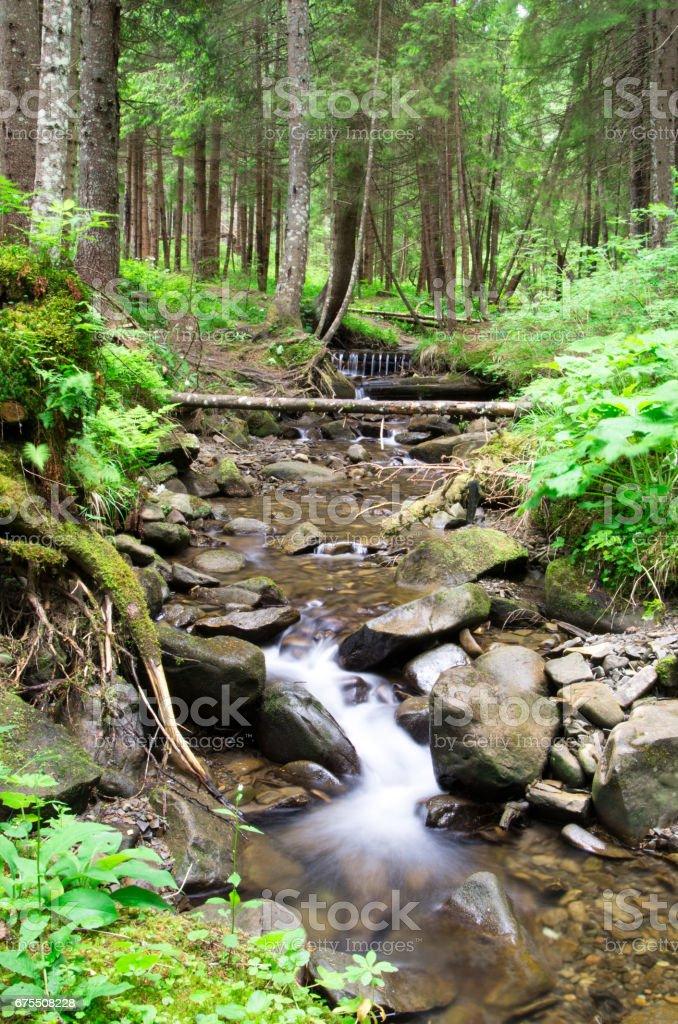 forest photo libre de droits