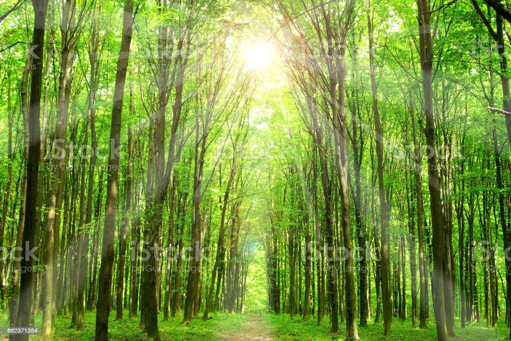 forest royaltyfri bildbanksbilder