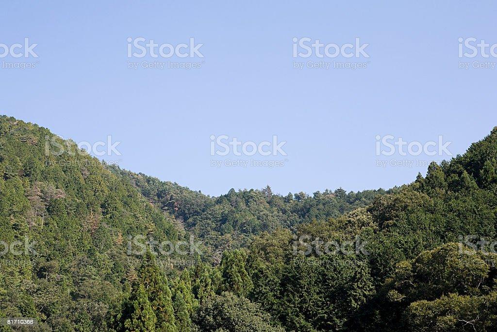 Floresta foto de stock royalty-free