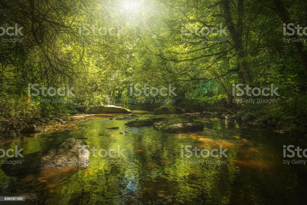 forêt stock photo