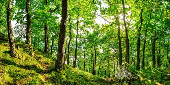 Orman Stok Fotoğraflar & Almanya'nin Daha Fazla Resimleri
