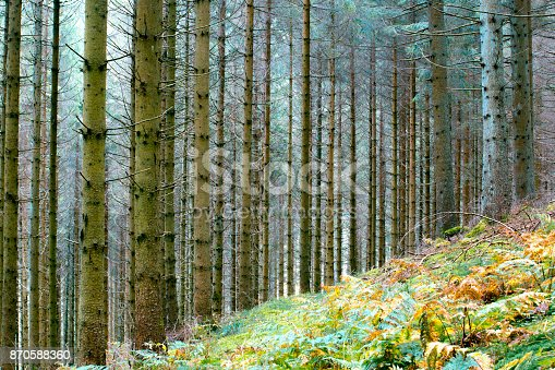 Amazing forest trees with amazing light.