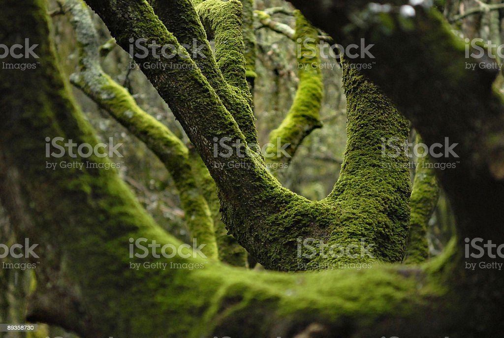 Forest foto stock royalty-free