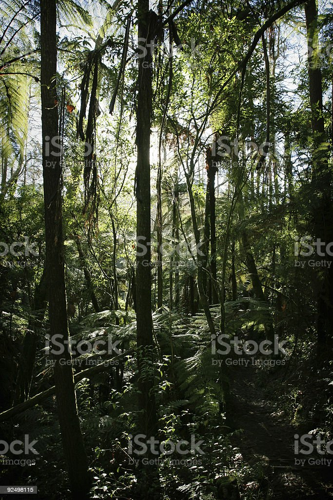 Forest Lizenzfreies stock-foto